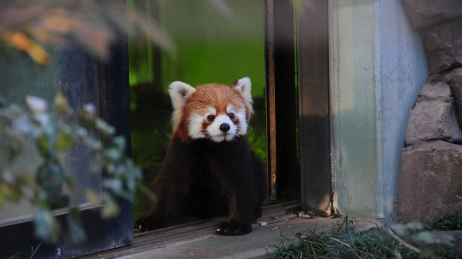 「夢見ケ崎動物公園」が無料でそこそこ楽しいのでいい感じでした
