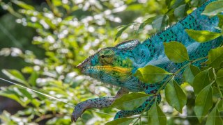 【爬虫類注意】静岡・伊豆の体感型動物園「iZoo(イズー)」が爬虫類好き歓喜の楽園だった