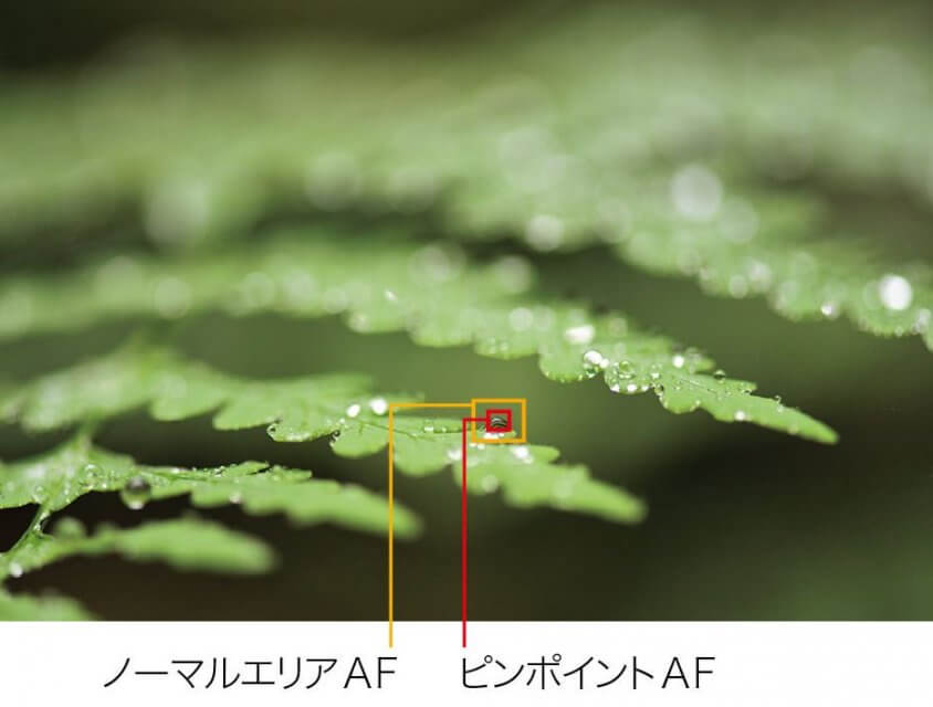 Nikon D850 特徴 ピンポイントAF