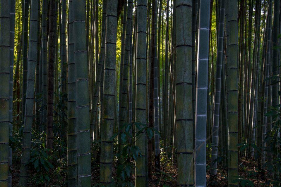 とらや工房 竹林