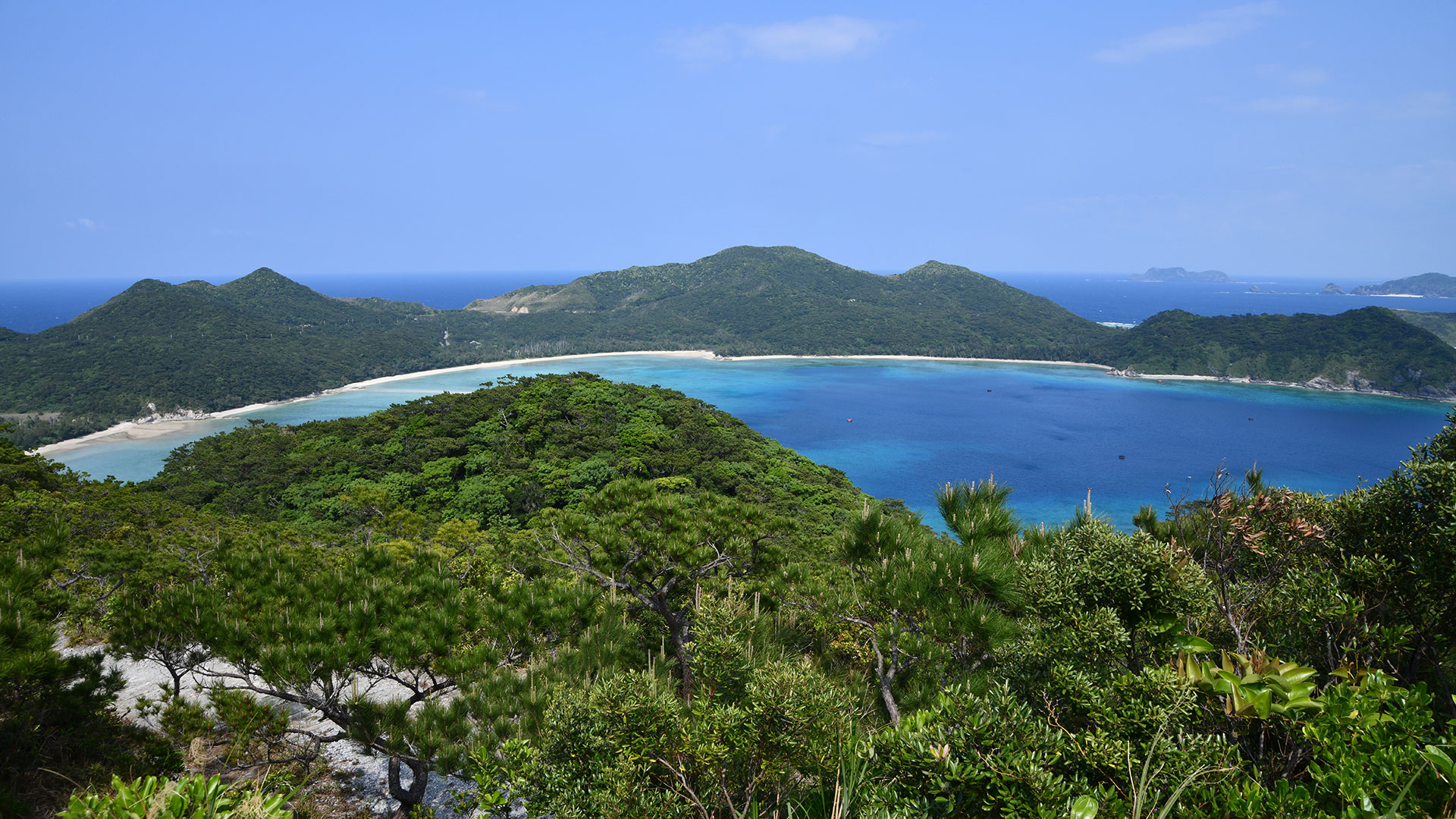 沖縄本島から1時間で行ける離島『座間味島』が最高すぎた